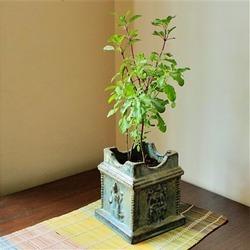www.spiritselfhealth.com-plants that create positive energy