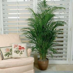 www.spiritselfhealth.com-healthy indoor plants