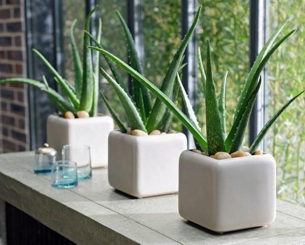 www.spirithealth.net-healthy indoor plants