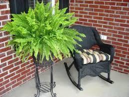 www.spiritsel;fheath-healthy indoor plants
