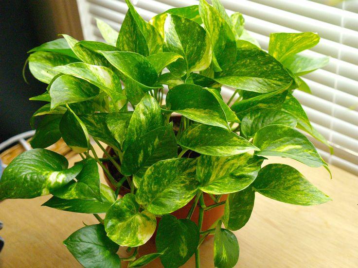 www.spiritself health.com-healthy indoor plants