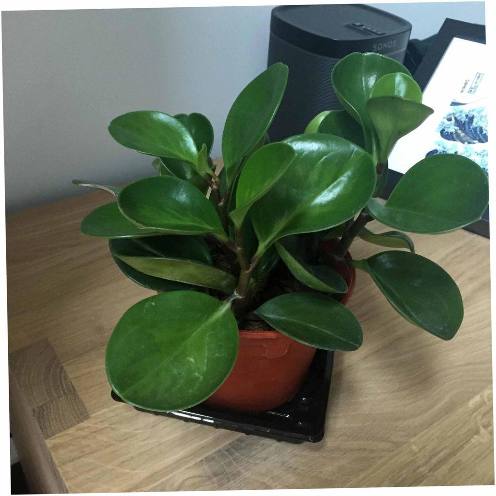 www.spiritselfhealth.com- healthy indoor plants